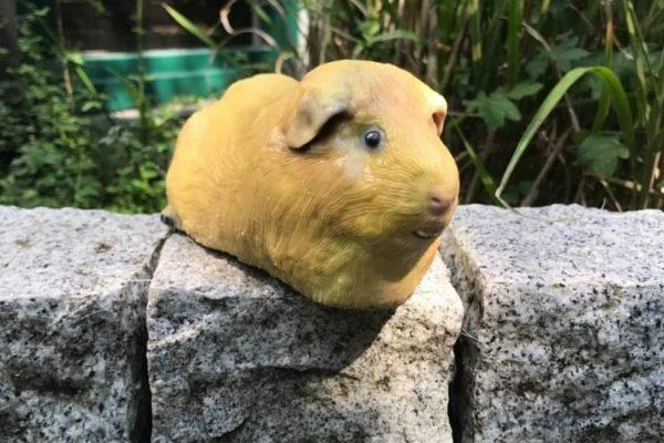 Tier_Hamster